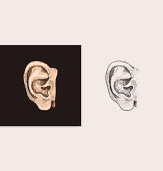 Hand drawn ear sketch symbol listen vector