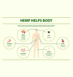 Hemp helps body horizontal infographic vector