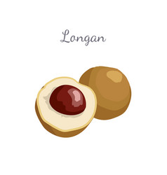 Longan exotic juicy fruit plant related to litchi vector