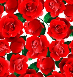 Red roses seamless pattern on a white background vector