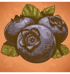 Engraving blueberry retro vector