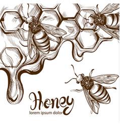honey bees combs line art retro vintage vector image