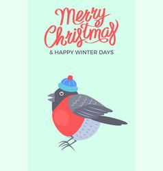 merry christmas bullfinch vector image