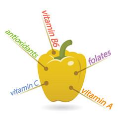Pepper content properties and benefits vector