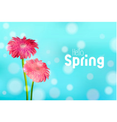 Hello spring pink daisy flowers greeting card vector