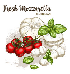 Realistic sketch mozzarella vector