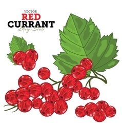 Red currant set vector