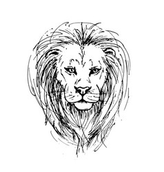 Sketch by pen of a lion head vector