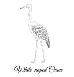 White naped crane bird type outline vector