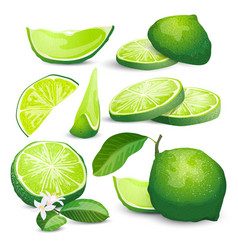 lime collection vector image
