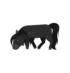 beautiful black horse pony on vector image
