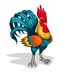 A rooster vector