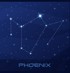 constellation phoenix night star sky vector image