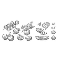 cucumbers garlic and tomato vector image vector image