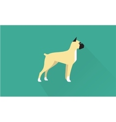 Boxer icon vector