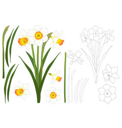daffodil - narcissus outline vector image