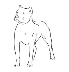 Drawing pitbull dog isolated on white vector
