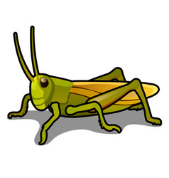 green grasshopper isolated on a white background vector image