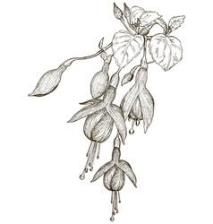 Hand Drawn Fuschia Flower Sketch vector image