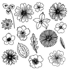 Set of drawing flowers vector
