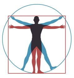 vitruvian man leonardo da vinci human body vector image