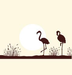 silhouette of flamingo beauty scenery vector image
