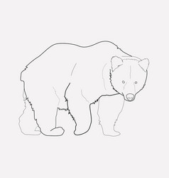 bear icon line element of vector image
