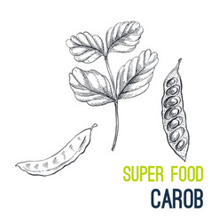 Carob super food hand drawn sketch vector