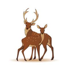 couple deers isolated vector image