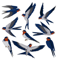 flying swallow birds in various views set flock vector image