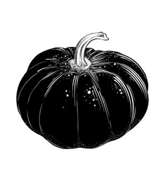 hand drawn sketch of pumpkin in black isolated on vector image