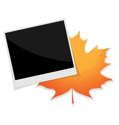 photo leaf vector image vector image