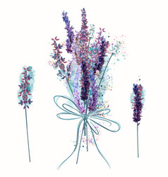 beautiful set bunch lavender flowers vector image