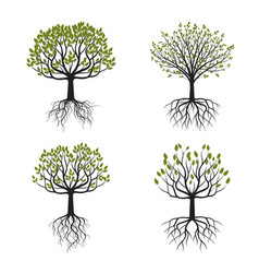 Set green tree with roots vector