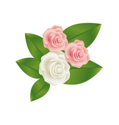 bouquet bud roses with leaves floral design vector image