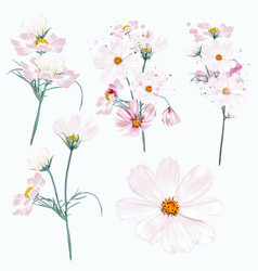 Collection cosmos flowers in watercolor style vector