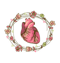 drawing of the heart anatomical vector image