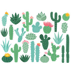 mexican cactus and aloe desert spiny plant vector image