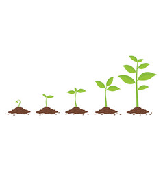 plants growing in ground phases plant growing vector image