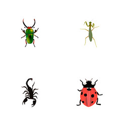 set of insect realistic symbols with beetle vector image