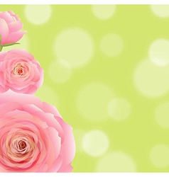 Pink Rose With Bokeh vector image