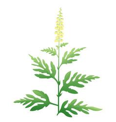 ragweed plant vector image
