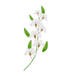 Bunch of white crape myrtle flowers vector