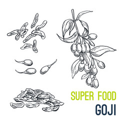 goji super food hand drawn sketch vector image