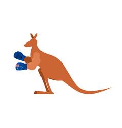 Kangaroo and boxing gloves australia boxer vector