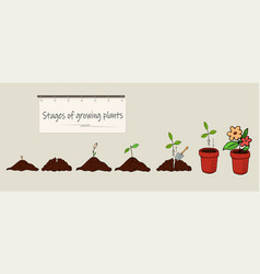 Phases of growing plants from seed vector
