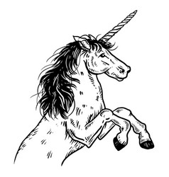 unicorn engraving vector image