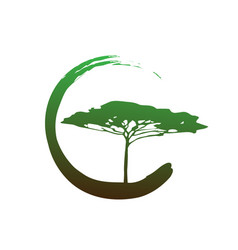 african tropical tree logo icon acacia tree bio vector image