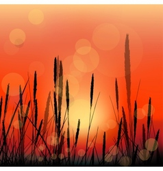 Landscape with red sunrise and grass silhouettes vector