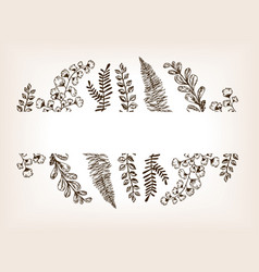 leaves of plants engraving vector image
